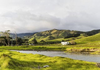 Port Jackson, North Island, New Zealand